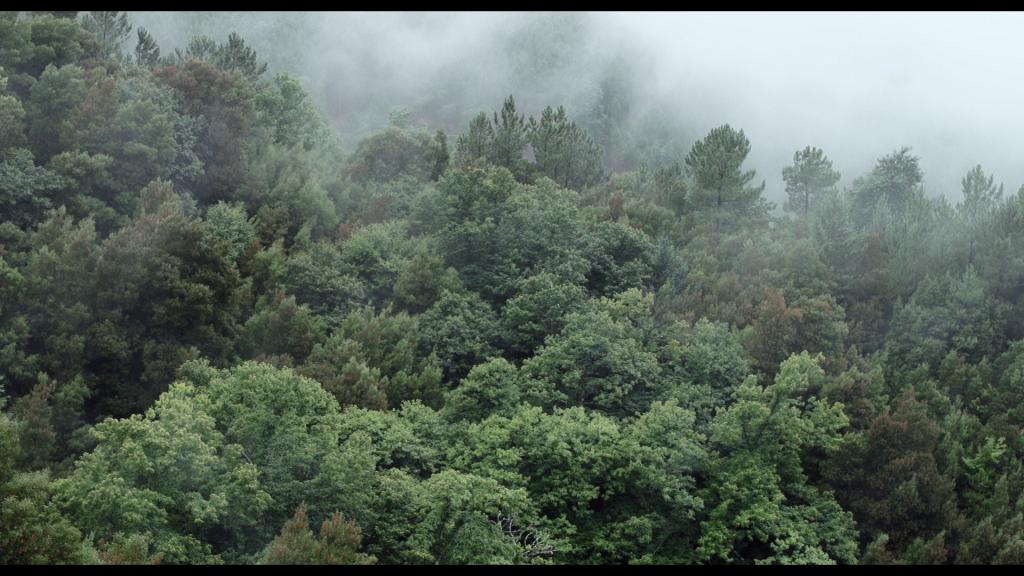 ETAM_still paisaxe 05